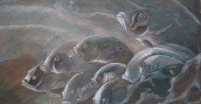 aquarium n°6